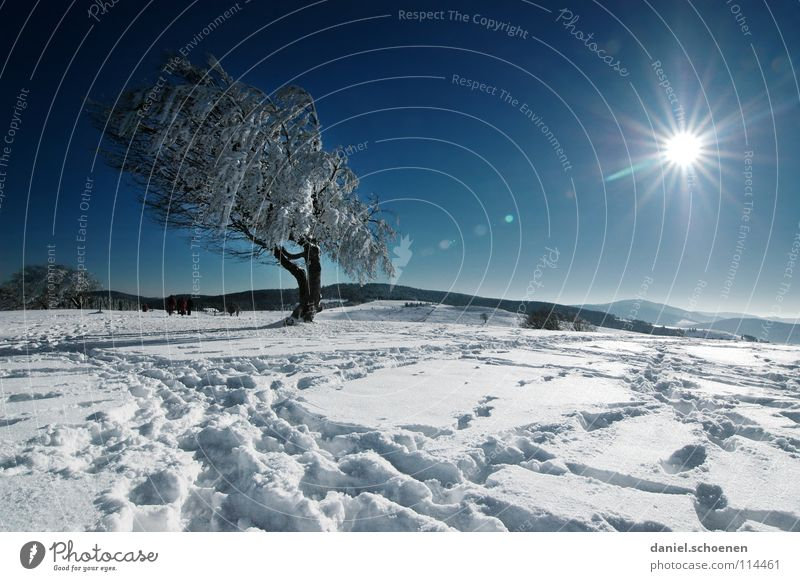 Christmas card 22 Sunbeam Winter Black Forest White Deep snow Hiking Leisure and hobbies Vacation & Travel Background picture Tree Snowscape Horizon Loneliness