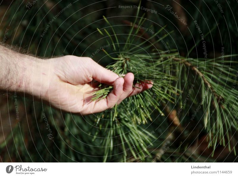 conifer Coniferous trees Hand Tree Fir needle Needle Green Touch Delicate Love Man Nature Contact Connection