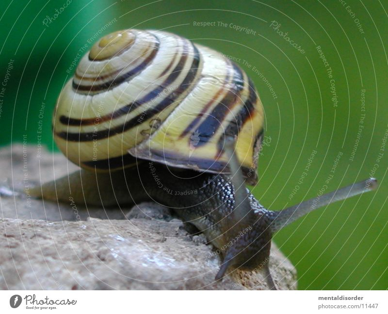 Escape? Mucus Feeler House (Residential Structure) Snail Stone