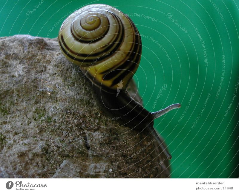 now it's downhill Mucus Feeler House (Residential Structure) Snail Stone