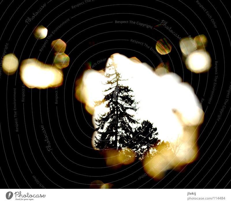 Sun Tree Loneliness Winter Dark Black Cold Lighting Wall (barrier) Derelict Decline Christmas tree Fir tree Hollow Spy Informer