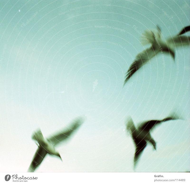fluttering imprisonment Seagull Flying Flee Go up Blur 3 Bird Escape Judder Unreliable Wing Lomography velvia cross Sky Nerviness startled Feather