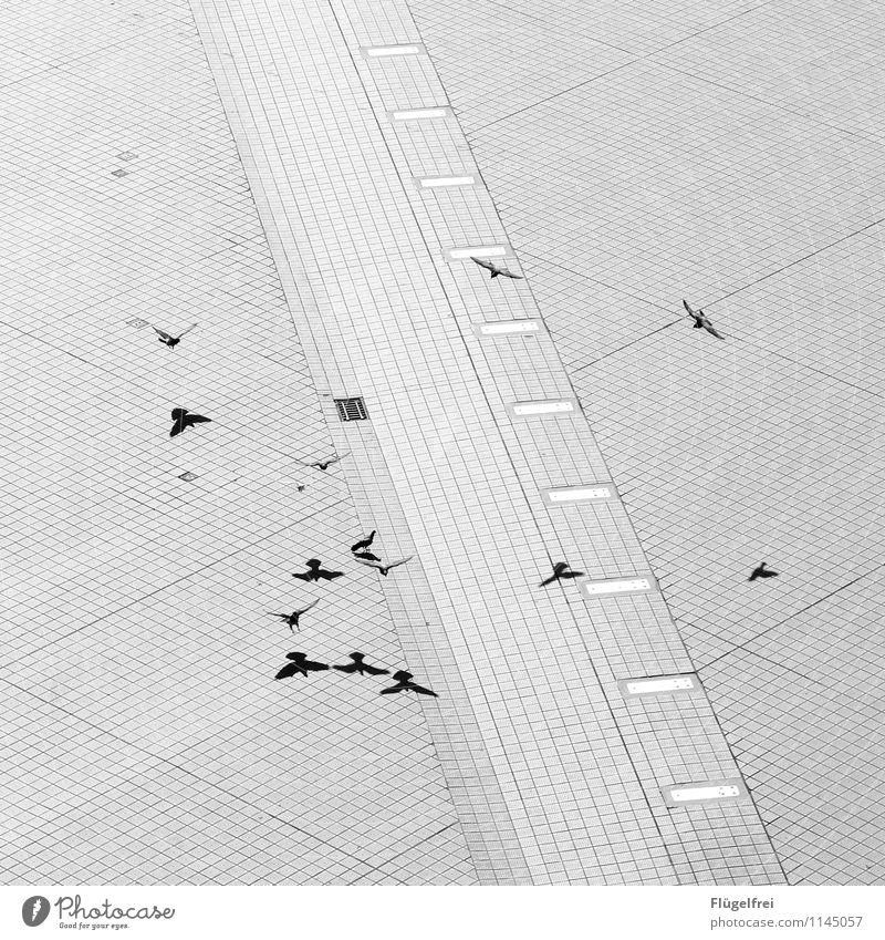 low-altitude flight Bird Group of animals Flying Wing Seagull Promenade small box Paving stone Line Structures and shapes Shadow Double exposure Many Landing