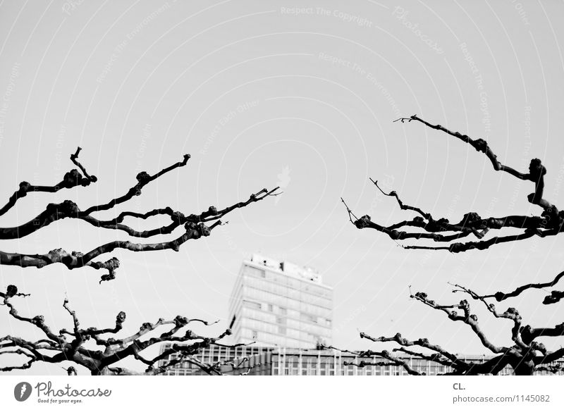 trees and houses Environment Nature Cloudless sky Weather Beautiful weather Tree Twigs and branches Duesseldorf Town High-rise Building Architecture Complex