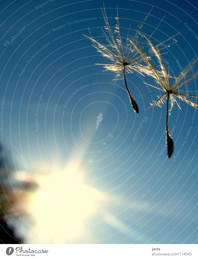 Sky Sun Summer Freedom Dream Together Flying To fall Dandelion Hover