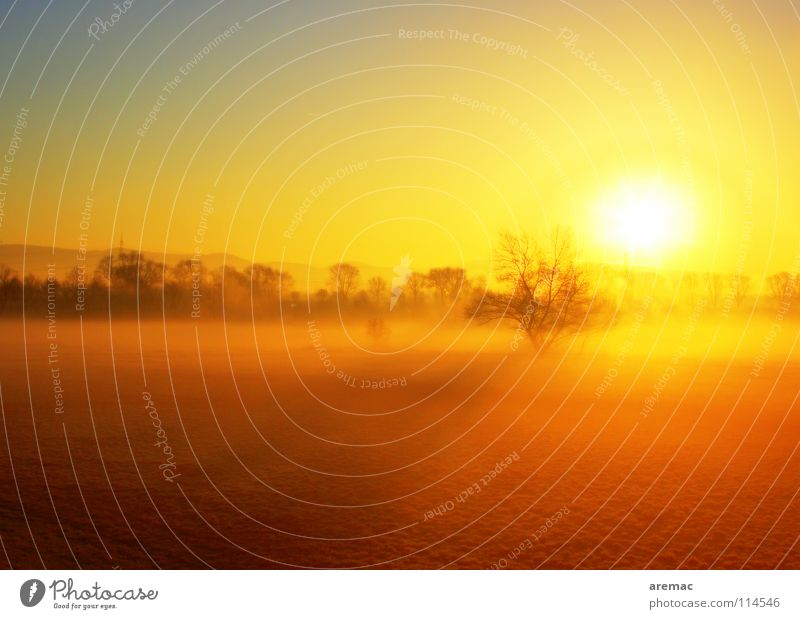 Sunrise Tree Meadow Landscape Germany Fog Celestial bodies and the universe Viernheim