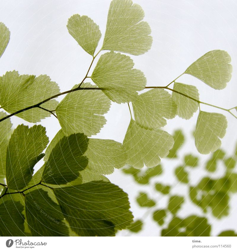 Green Plant Background picture Delicate Fine Classification Sensitive Foreground