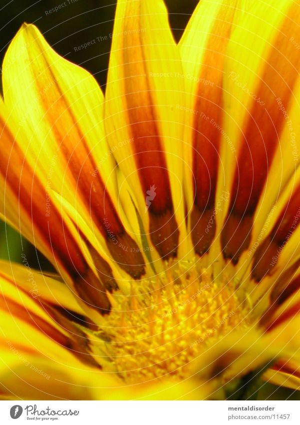 Green Red Yellow Blossom Orange