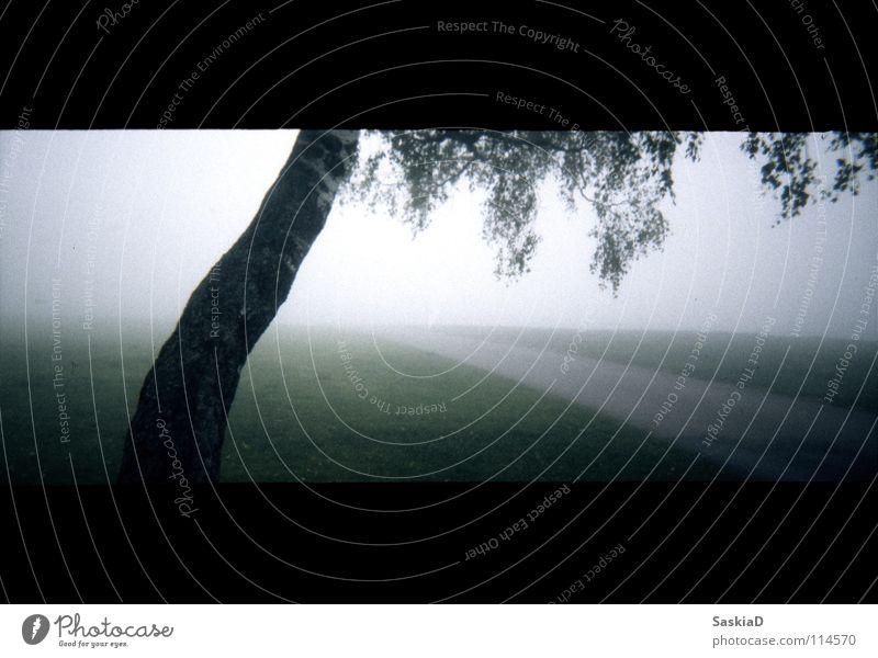 Tree Green Street Meadow Sadness Lanes & trails Landscape Moody Fog Grief Peace Distress Birch tree Minimalistic
