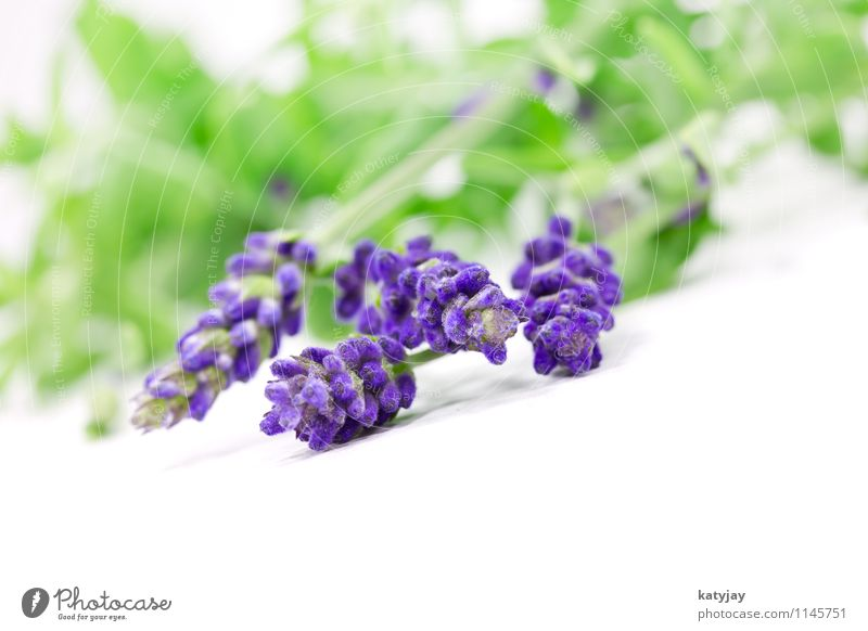 lavender Lavender Flower Bouquet Herbs and spices Bundle Relaxation Lilac Isolated (Position) Seasons Violet Nature Perfume Plant Summer Close-up Near