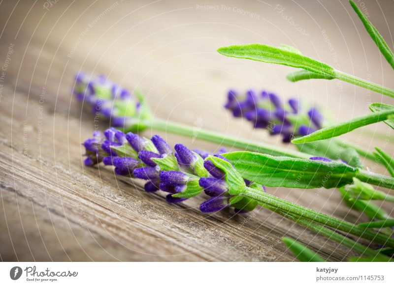 lavender Lavender Flower Bouquet Herbs and spices Bundle Blossom Lilac Seasons Violet Nature Plant Summer Close-up Near Blossoming Aromatic Relaxation Massage