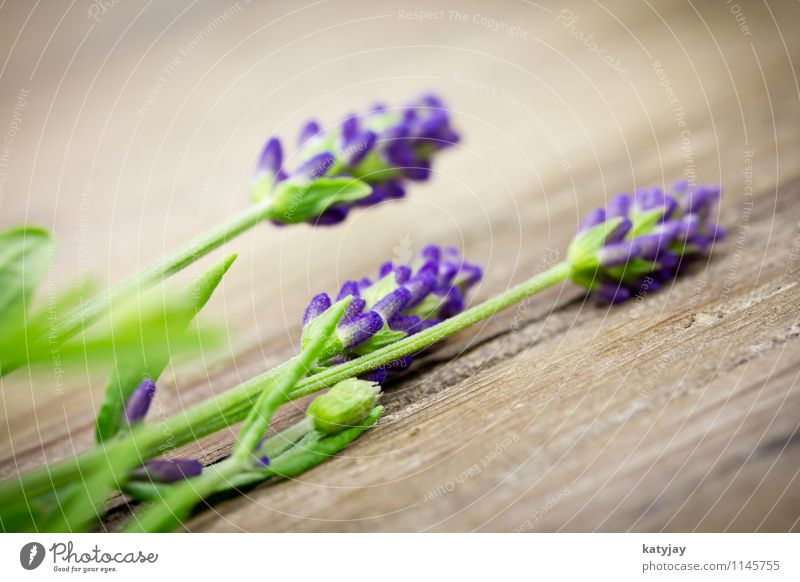 lavender Lavender Flower Bouquet Herbs and spices Bundle Blossom Relaxation Lilac Seasons Violet Medication Nature Plant Summer Close-up Near Blossoming
