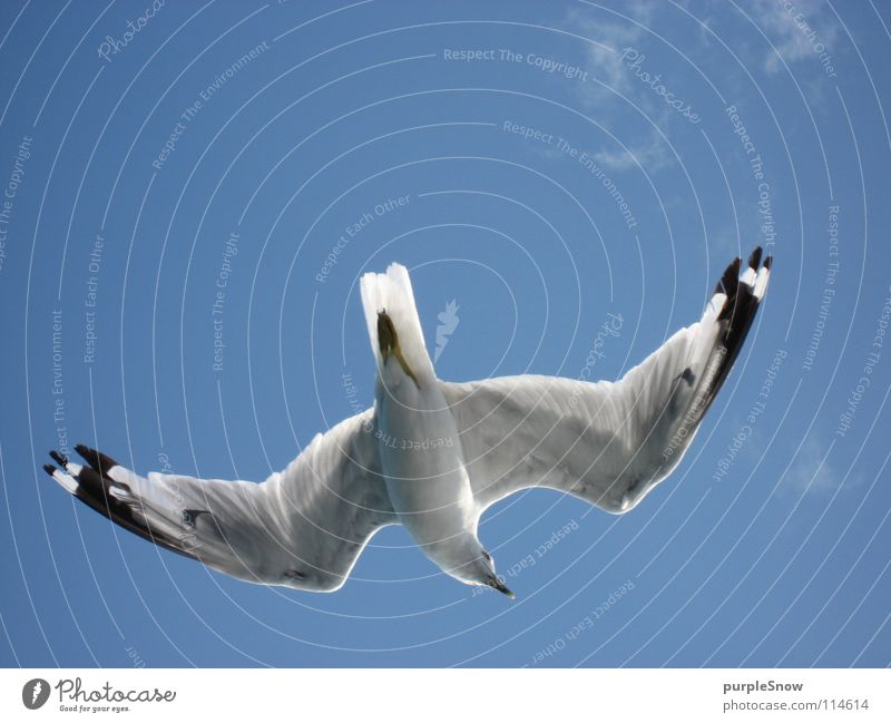 seagull belly Clouds Seagull Bird Animal Beautiful Soft Canada North America Ease Summer Exterior shot Joy Sky infinitely far Blue Colour Flying Wing Feather