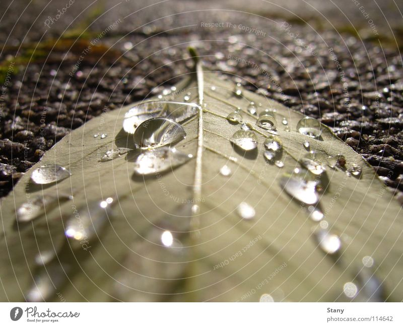 Leaf Autumn Gray Drops of water Wet Fresh Gloomy Sidewalk Boredom