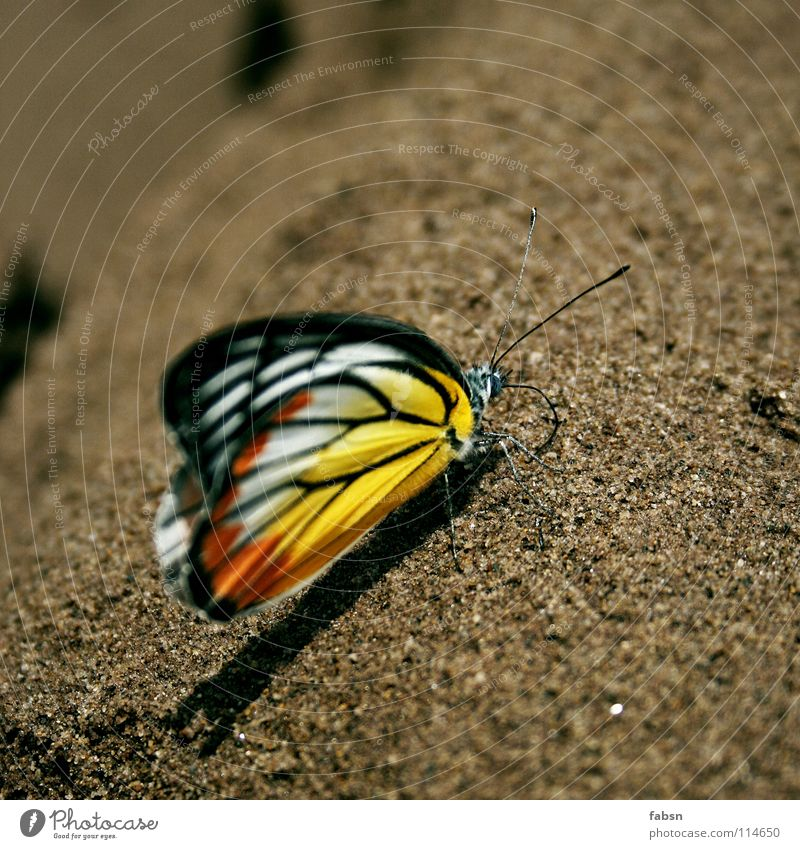 SMASHY Multicoloured Shadow Relaxation Summer Beach Nature Animal Sand Desert Butterfly Wing To enjoy Yellow Red Feeler Asia wings Orange intact world