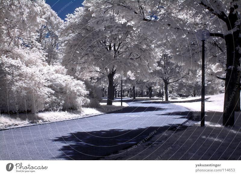 White Tree Meadow Grass Park Lawn Open Infrared Infrared color