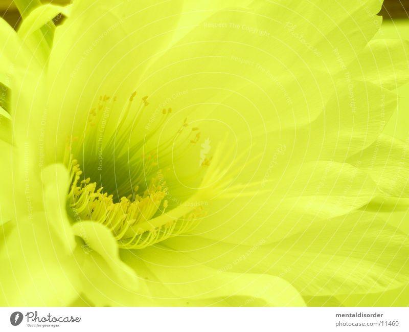 Leaf Yellow Pollen