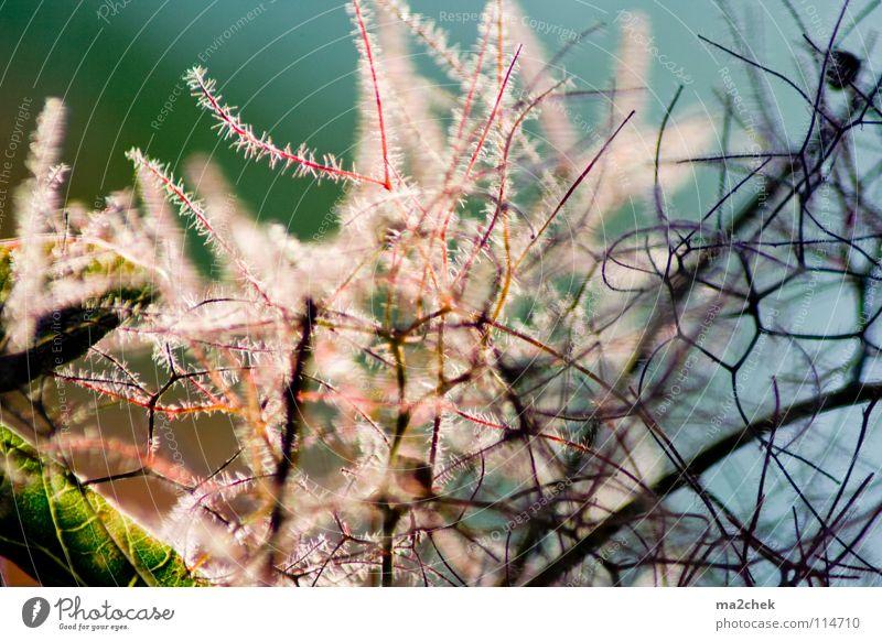 garden shrub Plant Botany Bushes Vessel Branchage Garden Park