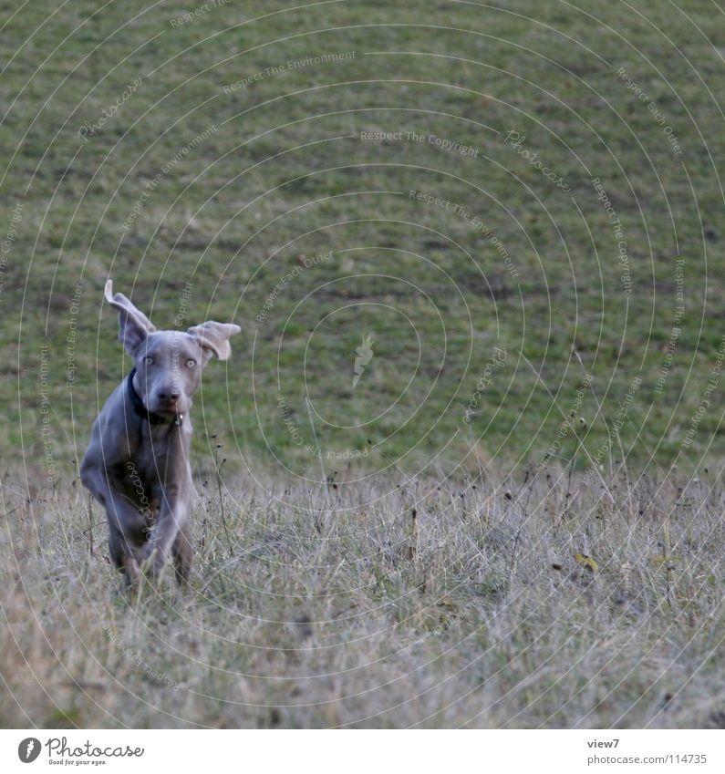 Joy Winter Meadow Jump Dog Walking Running Joie de vivre (Vitality) Dynamics Pet Mammal Snout Romp Puppy Exuberance Hound