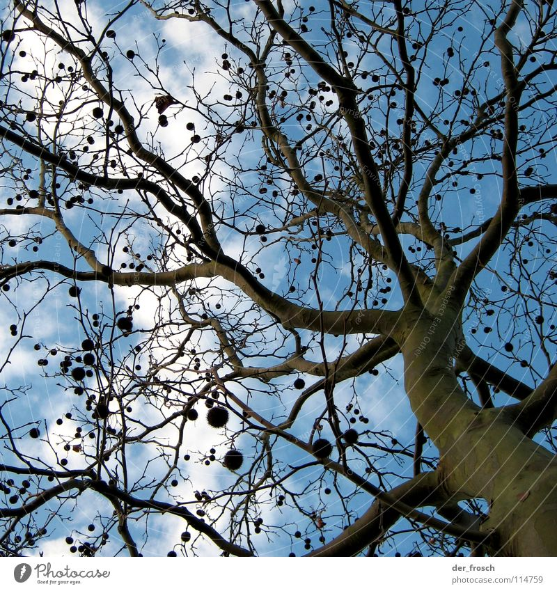 Sky Tree Green Blue Winter Clouds Autumn Brown Branch Sphere Tree trunk Tree bark