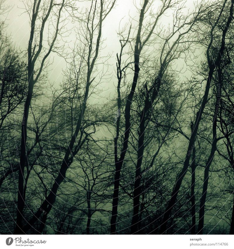 Nature Plant Tree Loneliness Calm Dark Forest Sadness Moody Fog Gloomy Branch Mysterious Ghosts & Spectres  Gale Fairy tale