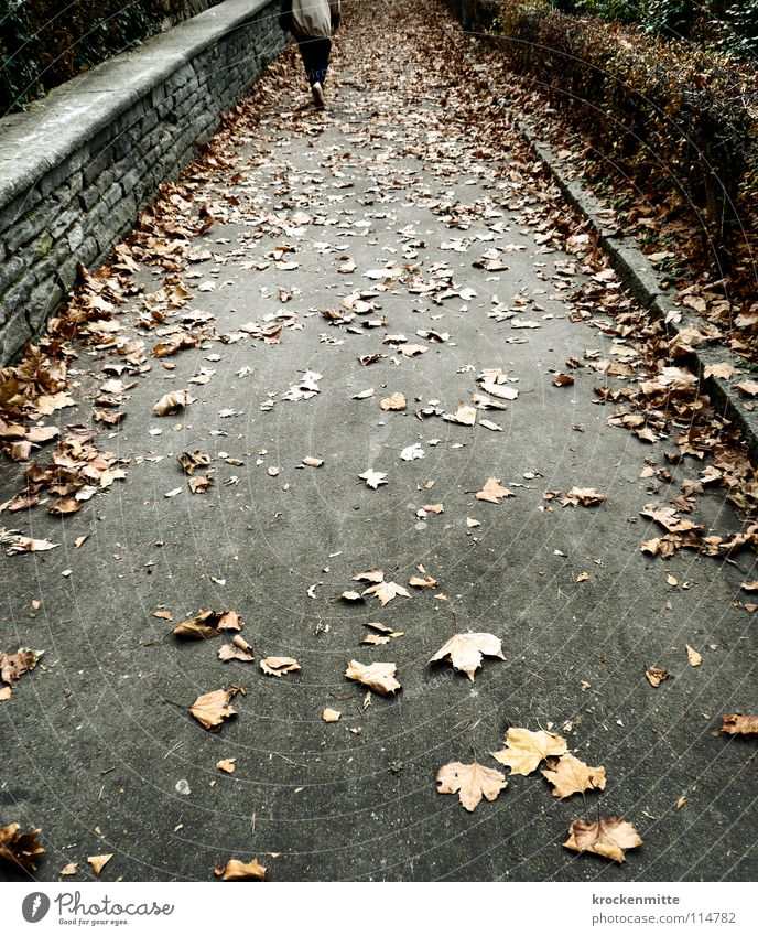 autumn cycle Autumn Leaf Seasons Pedestrian Hedge Wall (barrier) Stone wall Going Grief Loneliness Lanes & trails To go for a walk Sadness