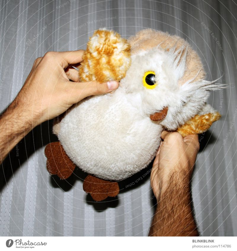 owl flight Owl birds Cuddly toy Plush White Brown Soft Toys Hand Bird Night Playing Fingers Beak Sweet Obscure Flying Joy Adhesive Wing arm hairiness Skin Arm