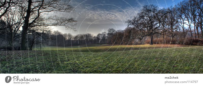 Tree Meadow Garden Park Landscape Panorama (Format) HDR Dynamic compression