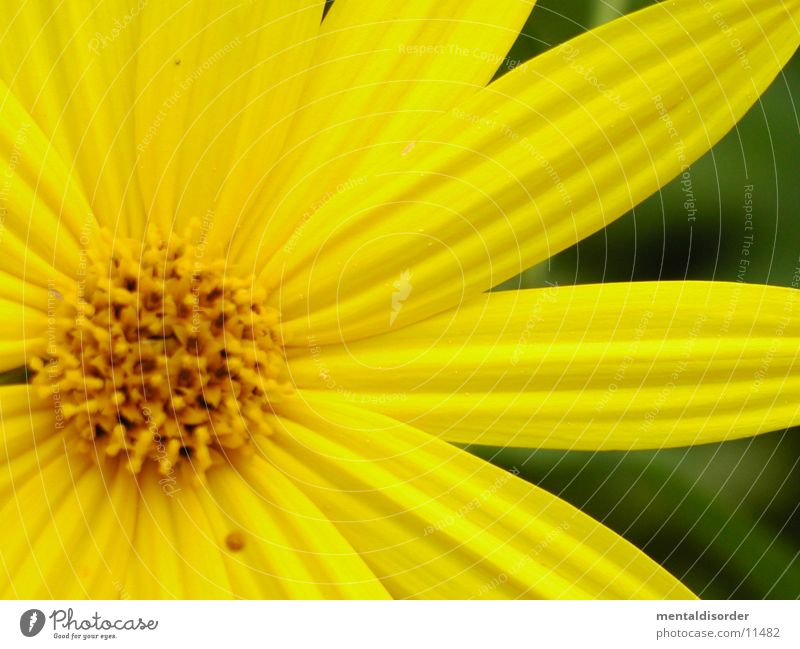 Flower Green Leaf Yellow Blossom