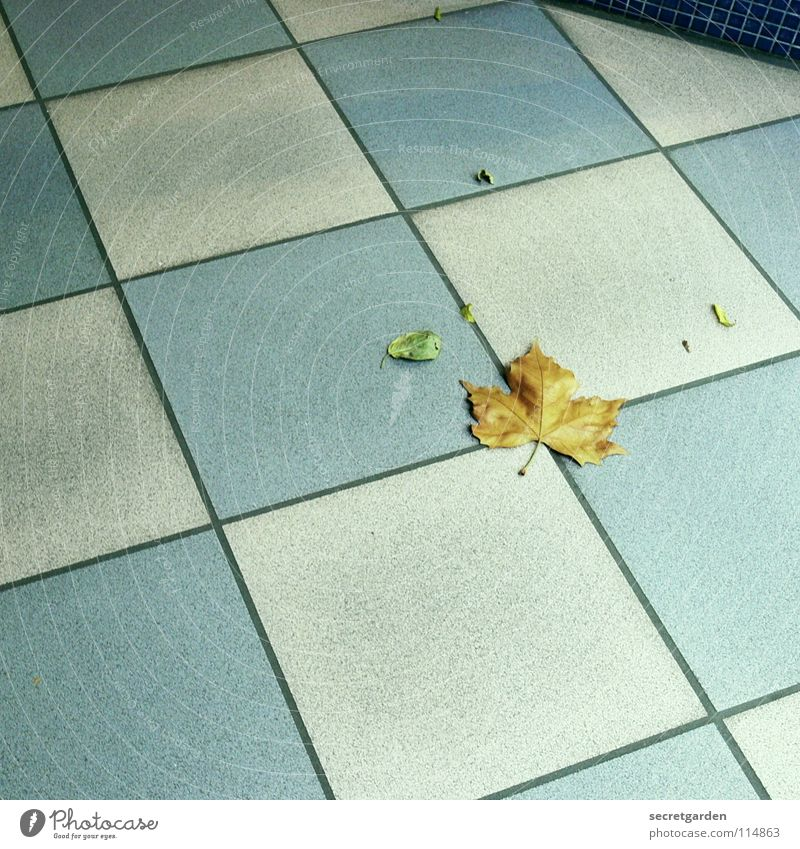 small chequered leaf Room Tile Pattern White-blue Square Floor covering Passage Shopping arcade Vacancy Loneliness Clean Leaf Autumn Winter Dirty Meticulous