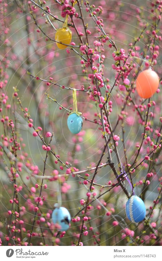 Easter Garden Decoration Feasts & Celebrations Spring Plant Tree Bushes Leaf Blossom Multicoloured Easter egg Egg Bud Spring colours Blossoming Colour photo