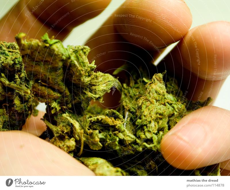Nature Hand Green Joy Nutrition Large Fingers Search Dangerous Threat Culture Smoking To hold on Catch Intoxicant Easy