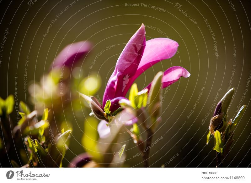 Nature Beautiful Green Relaxation Leaf Blossom Spring Style Happy Freedom Garden Pink Glittering Contentment Illuminate Growth