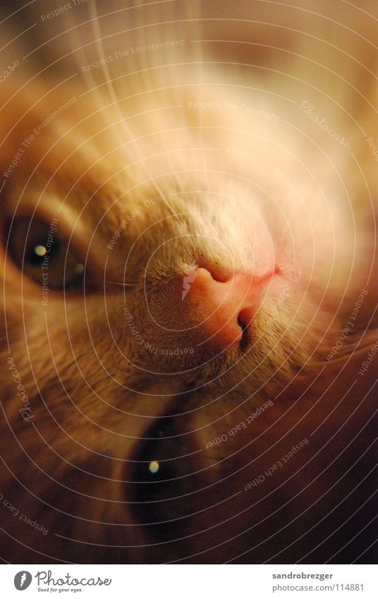 Cat Warmth Eyes Lie Cute Friendliness Pelt Fatigue Mammal Rotate Domestic cat Dreamily Cuddly Snout Whisker Meow