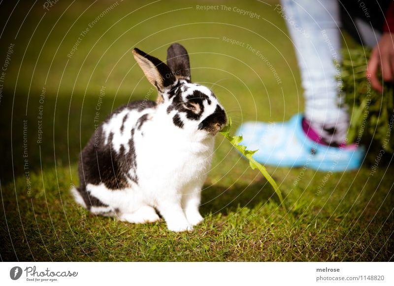 P A U S E Dandelion Girl Fingers Legs Feet 8 - 13 years Child Infancy Pet Pelt Paw Pygmy rabbit Mammal Hare ears Hare & Rabbit & Bunny Animal Spoon Relaxation