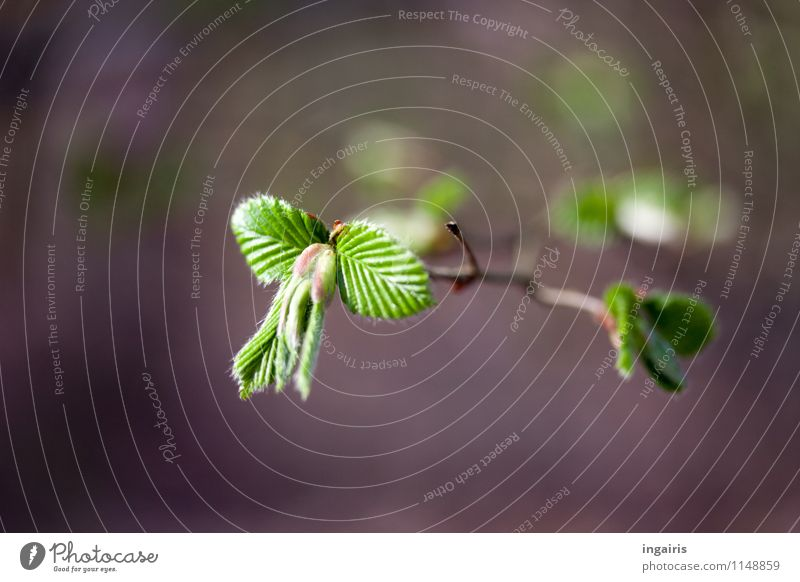 Nature Plant Green White Tree Leaf Life Spring Natural Gray Moody Growth Fresh Illuminate Esthetic Branch