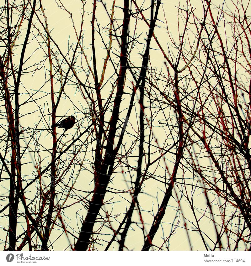 Tree Winter Leaf Loneliness Cold Autumn Bird Sit Empty Bushes Branch Curiosity Twig Timidity Remainder Branchage