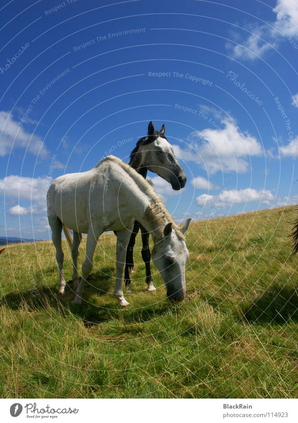 Sky Summer Clouds Grass Freedom Horizon Horse