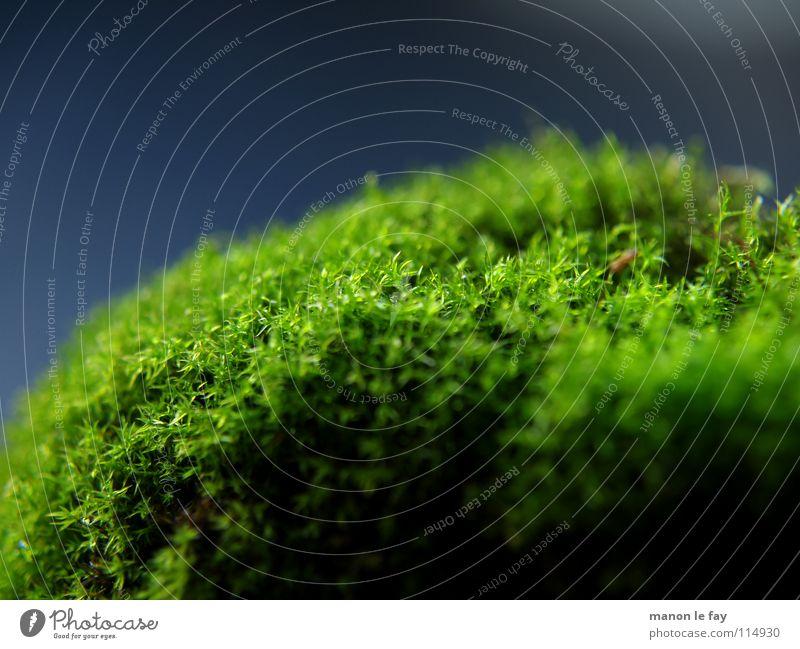 Nature Blue Green Black Autumn Background picture Glittering Soft Near Carpet Carpet of moss