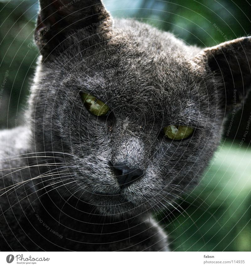 Nature Green Beautiful Animal Relaxation Eyes Cat Freedom Gray Posture Concentrate Appetite Mammal Magic Smart Witch