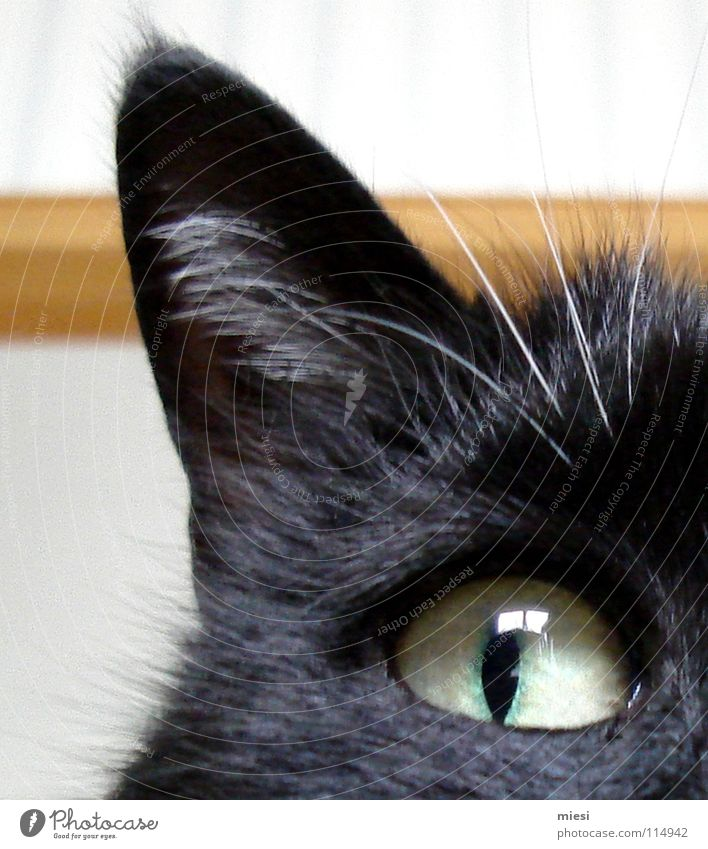 Cat Animal Black Eyes Observe Ear Pelt Watchfulness Evil Facial expression Mammal Cuddly Domestic cat Partially visible Pupil Cat eyes