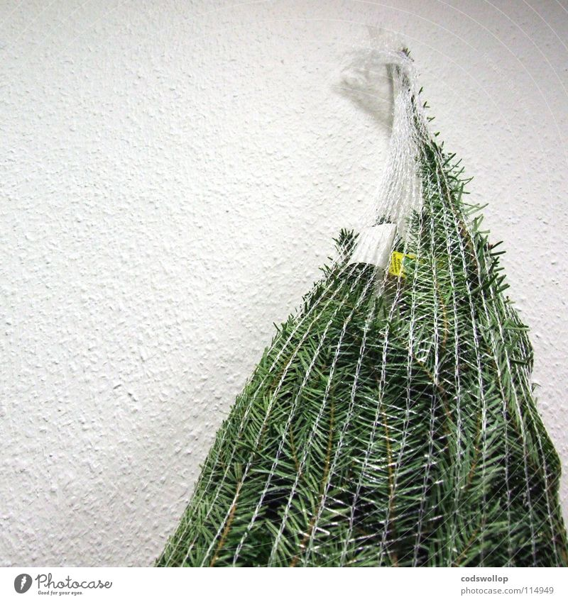 nicely packaged Packaging Christmas tree Fir tree December Sustainability Agriculture Tradition Tree Living room Christmas & Advent Winter Evergreen plants