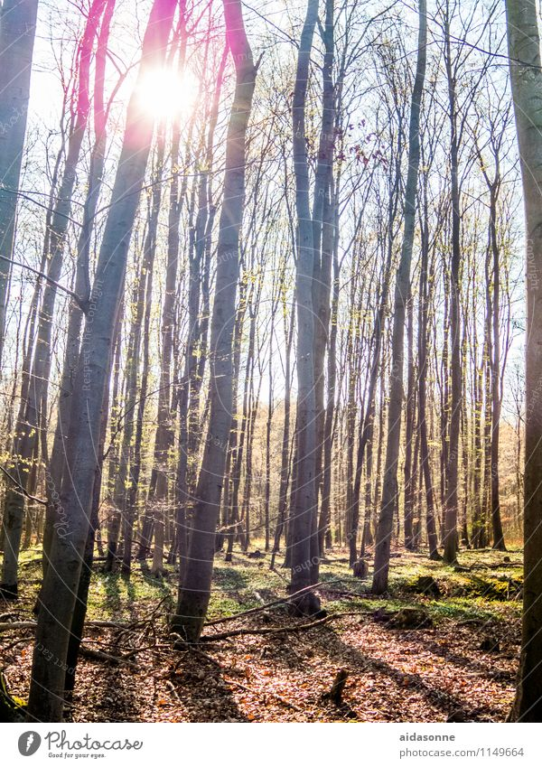 spring sun Nature Landscape Sunlight Spring Bad weather Forest Contentment Beautiful Attentive Calm Mecklenburg-Western Pomerania Back-light Beech wood