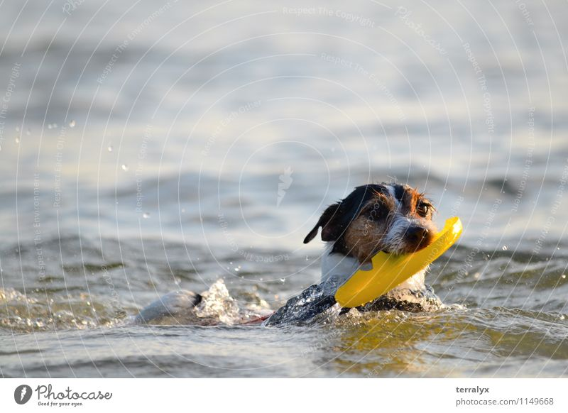 Dog in the ocean Blue White Water Joy Animal Black Yellow Movement Funny Happy Swimming & Bathing Brown Free Happiness Speed