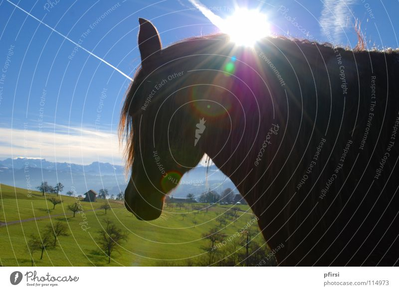 Tree Sun Green Blue Clouds Dark Meadow Horse Radiation Side Pasture Mammal Right