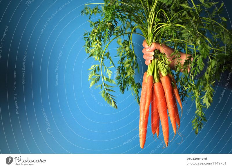 Much helps Much Food Vegetable Nutrition Organic produce Vegetarian diet Carrot Raw vegetables Healthy Healthy Eating Hand Plant Fresh Delicious Many Blue Green