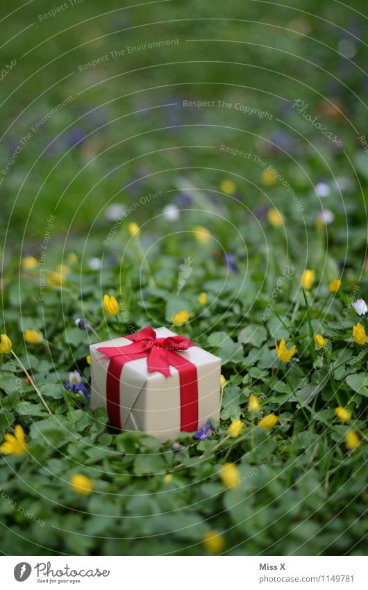 in the meadow Feasts & Celebrations Valentine's Day Mother's Day Birthday Spring Flower Grass Meadow Packaging Package Bow Emotions Moody Love Infatuation