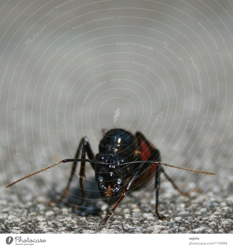 Nature Black Eyes Animal Head Gray Legs Animal face Asia Insect Facial expression Feeler Crawl Frontal Ant Attack