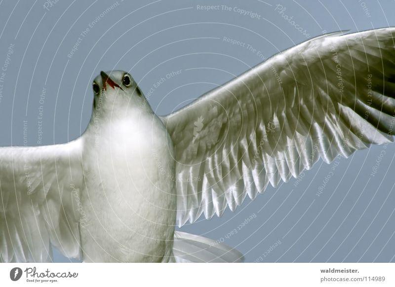 Sky Ocean Beach Bird Flying Aviation Feather Wing Seagull Animal Black-headed gull
