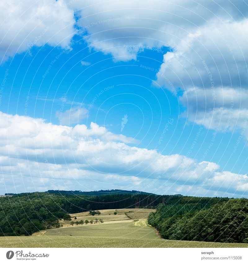 Rural Landscape Sky Nature Green Summer Tree Relaxation Calm Clouds Far-off places Forest Environment Meadow Grass Natural Freedom